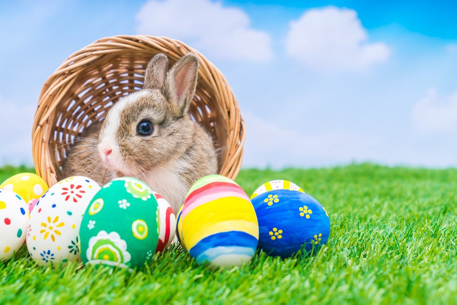 http://www.oneescape.ie/wp-content/uploads/2018/03/430Easter-bunny.jpg
